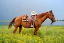 Cowboy Hat On Horse