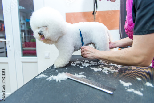 Valokuva  Grooming dogs Bichon Frise in a professional hairdresser