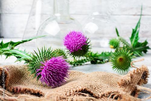 Fotografia Extract from medicinal plants