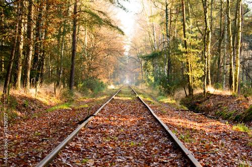 Poster Voies ferrées Old railroad tracks in dense hardwood forest