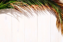 Shadow Of Tropical Palm Leaf  With Coconut Cocktail On White Wooden Background  With Copy Space. Concept For Vacation Or Summer.