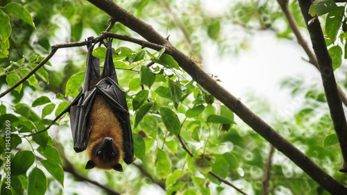 Bat hanging upside down on the tree.