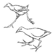 Illustration Vector Hand Drawn...