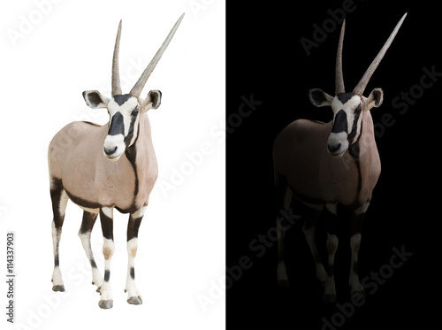 Foto auf Leinwand Antilope oryx or gemsbok in dark background