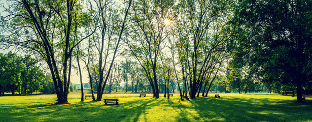 sunny summer park with trees and green grass