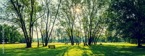 Fototapeta sunny summer park with trees and green grass obraz