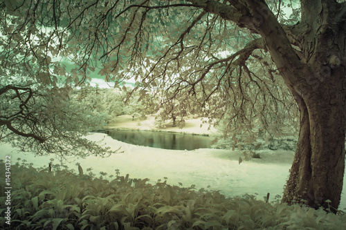 Poster Olive Stunning infrared alternative color landscape image of trees ove