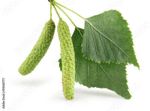 Fotomural green birch buds isolated on the white background
