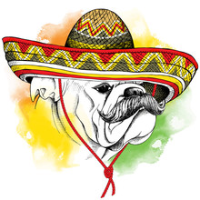 The Poster With The Image Of The Dog Bulldog With A Mustache In The Mexico Sombrero. Vector Illustration.