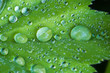 Green leaf with rain drops