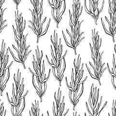 Fototapeta Rosemary vector drawing seamless pattern. Isolated Rosemary plan