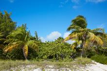 Key West Beach Fort Zachary Taylor Park Florida