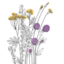 Vector Sketch Of The Wildflowers