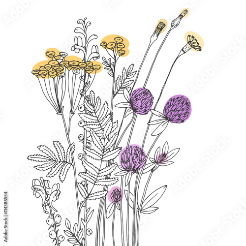 Fototapeta Vector sketch of the wildflowers obraz