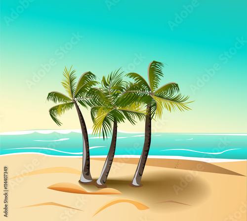 Fototapeta palm trees on the beach against the blue sea