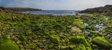Algues Marine Sur Les Rochers
