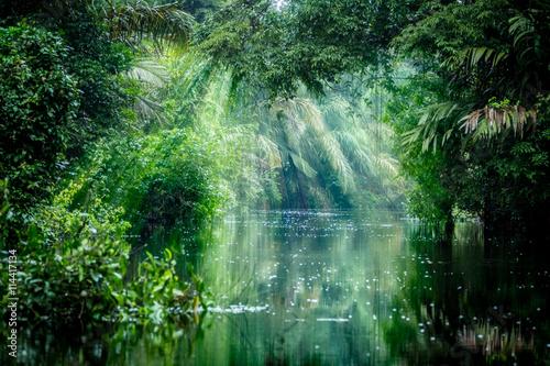 Cadres-photo bureau Rivière de la forêt Into The Rainforest