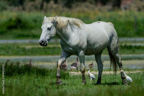 Cavalli allo stato brado