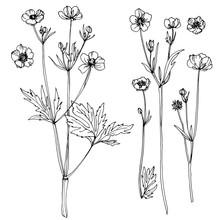 Wildflowers. Buttercups. Flowe...