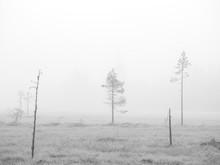 Bare Trees In Snowscape