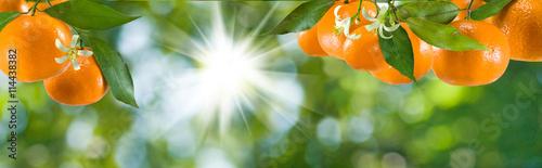 fototapeta na ścianę image of ripe sweet tangerine closeup