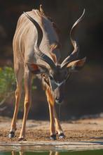 Kudu By Water