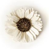 Suchy biały kwiat używany do perfumowania pokoi na białym tle - 114495919