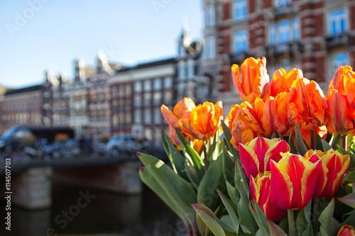 tulpen-in-amsterdam