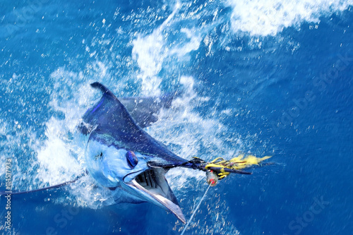 Poster Vissen Blue marlin on the hook
