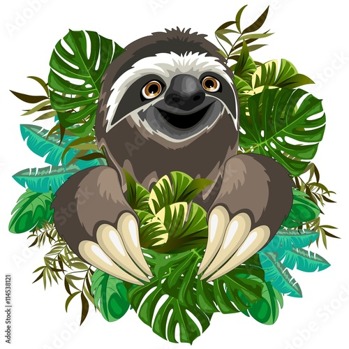 Photo Stands Draw Sloth Cute Cartoon on Tropical Nature