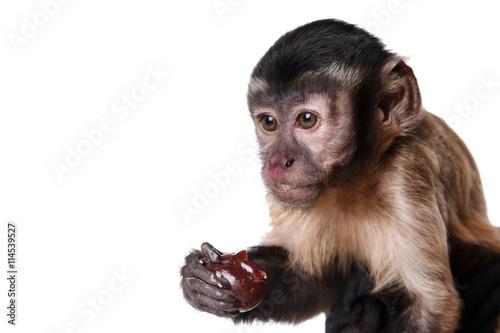 In de dag Aap cute little monkey