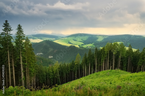 Poster Taupe Tatra mountains landscape pine forest