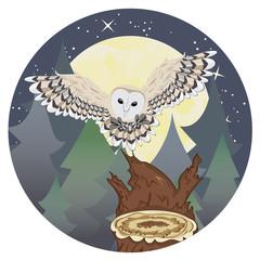 Barn Owl on a Tree Stump