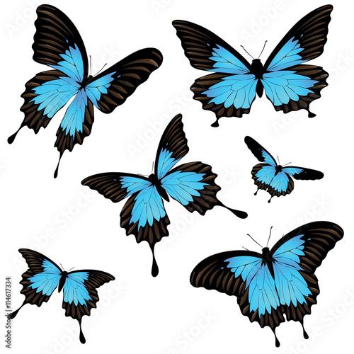 Mountain Swallowtail Set Canvas-taulu