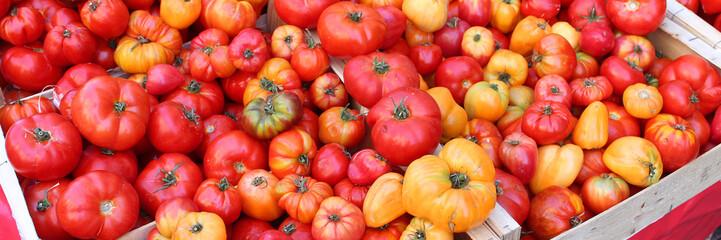 Tomates bio rouges et jaunes