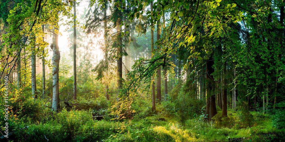 Fototapety, obrazy: Wschód słońca w lesie