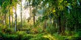Fototapeta Las - Sonnenaufgang im Wald