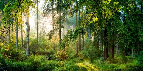 FototapetaSonnenaufgang im Wald