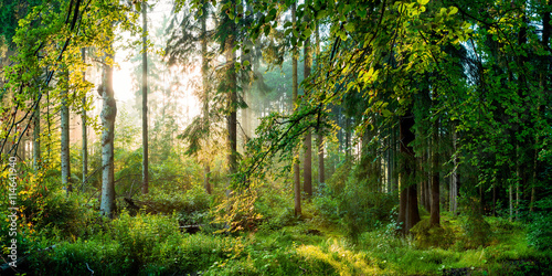 Poster Forets Sonnenaufgang im Wald