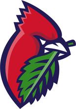 Cardinal Head Leaf Isolated Retro