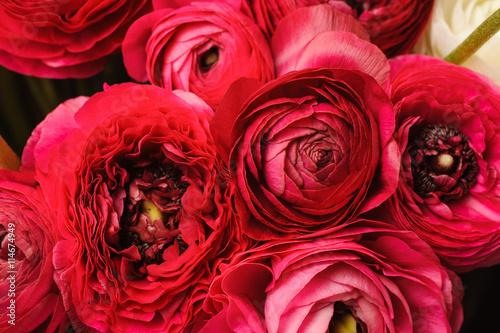 Obraz na plátne Close up of vivid red ranunculus flower