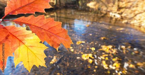 Fototapeta detail of leaf in the autumn obraz na płótnie