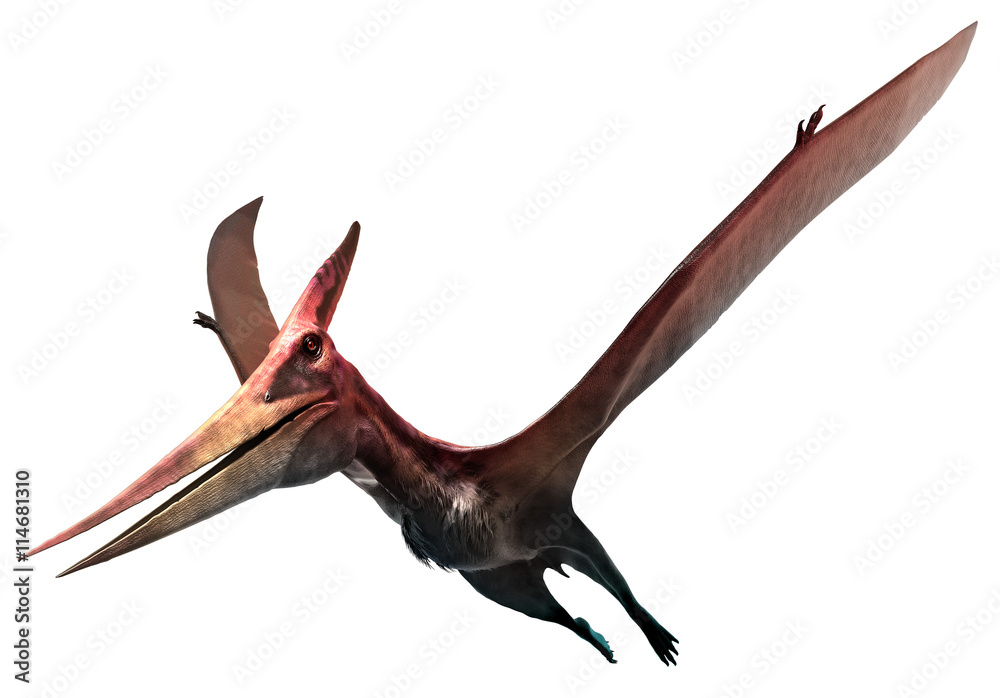 Fototapety, obrazy: Pteranodon