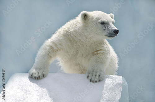 Recess Fitting Polar bear Белый медвежонок.