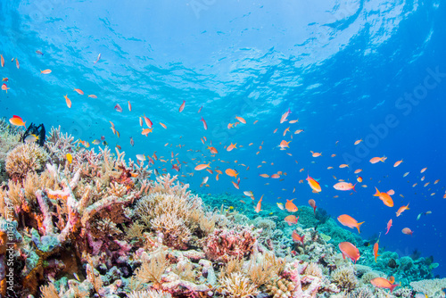 Tuinposter Koraalriffen Coral Reef and Colorful Fishes