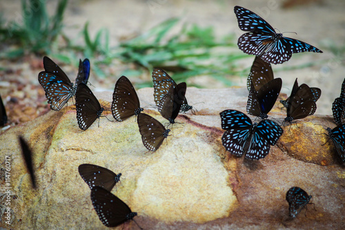 Acrylic Prints Stones in Sand butterfly
