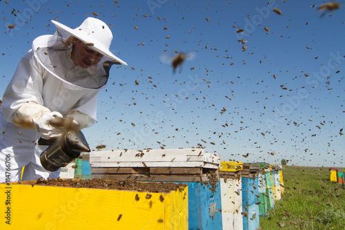 Woman beekeeper smoking the beehives Wallpaper Mural