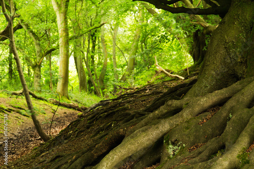 Fototapeten Wald View through English woodland in the summer