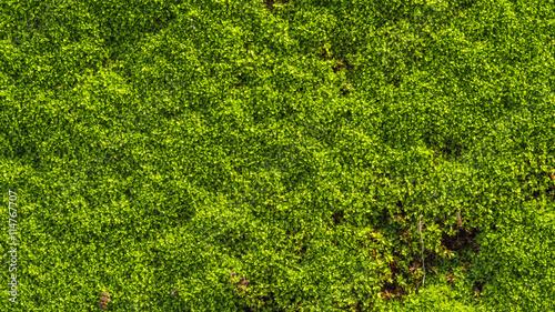 Fotografie, Obraz  Green moss on old concrete floor