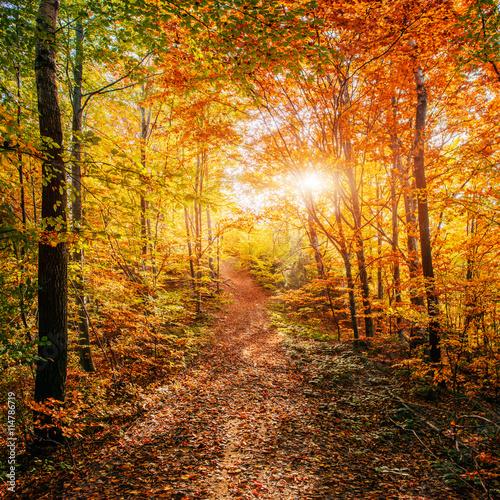 Stickers pour portes Orange eclat Forest Road in the autumn. Autumn Landscape.